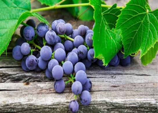How to reduce fire in summer, eat grapes and strawberries