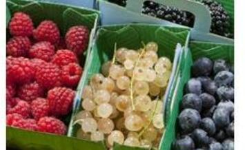 Recommended winter season foods can help keep you healthy